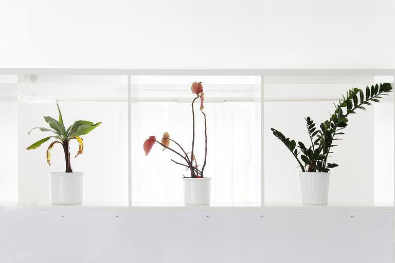 detail - prostor pro květiny – kanceláře IPEX praha | Horalík Atelier